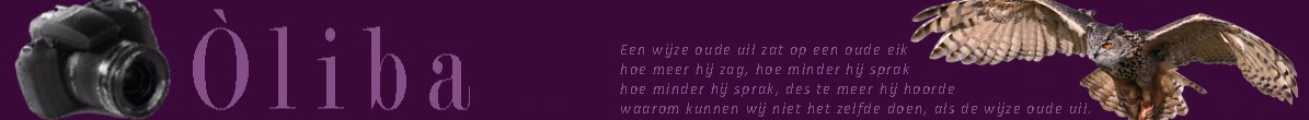 www.oliba.nl